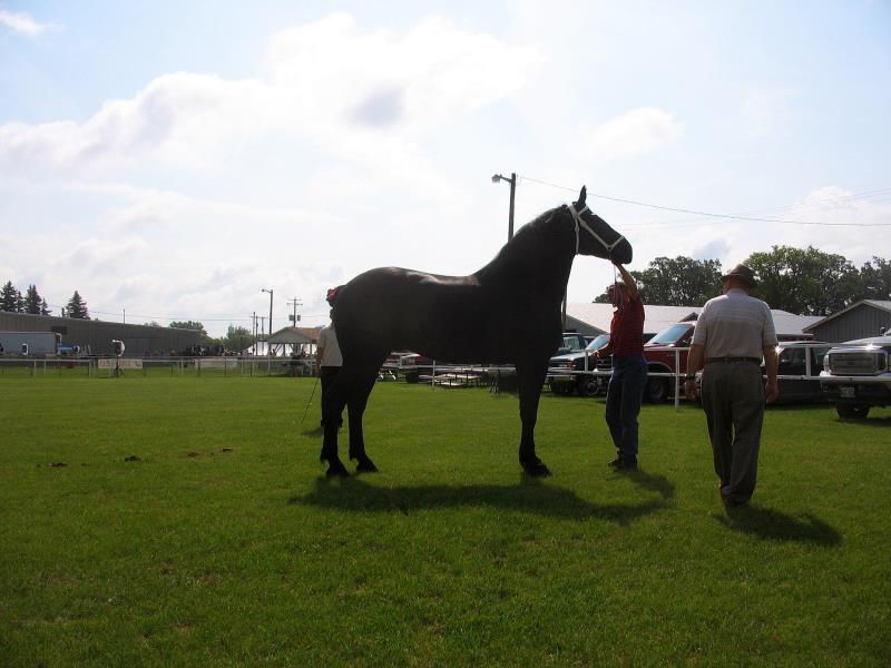 Big Wheel Horse