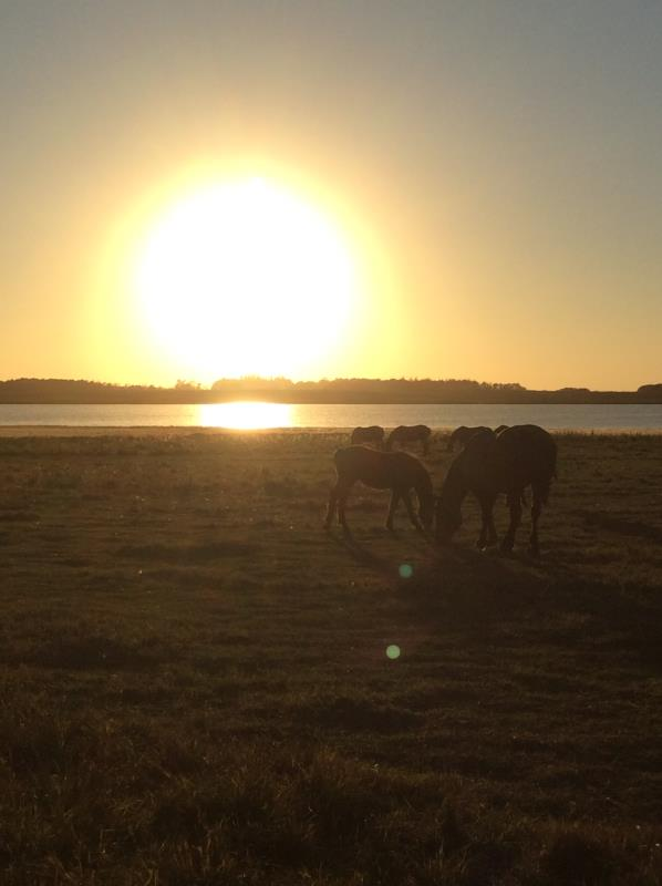 Mare and Foal in Sunset